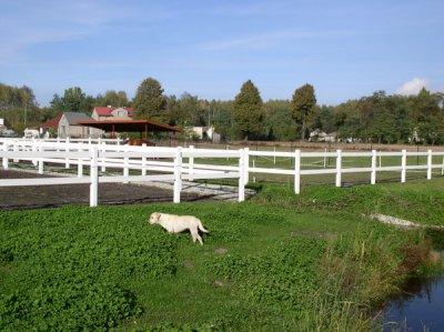 Ogrodzenia farmerskie na wybiegi.